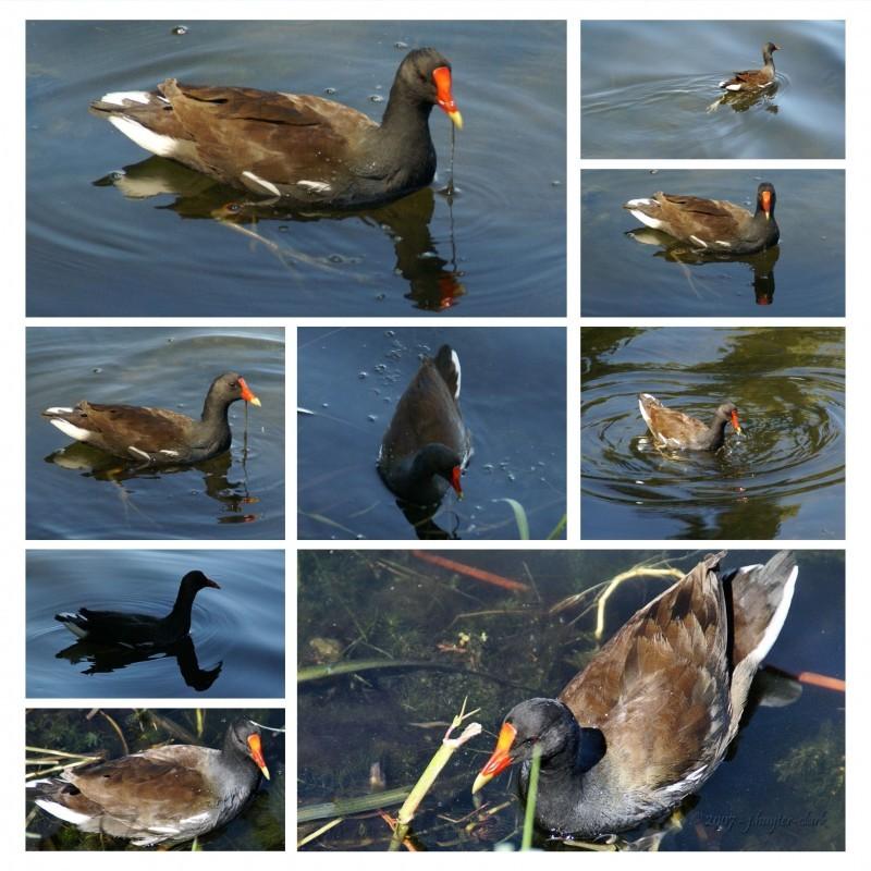 Duck at Anderson Park, Tarpon Springs, FL