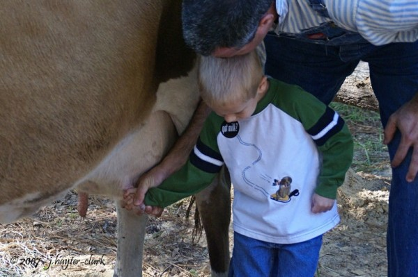 Learning to milk a cow...