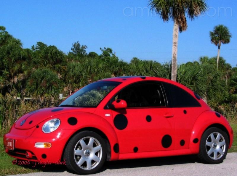 My Ladybeetle II