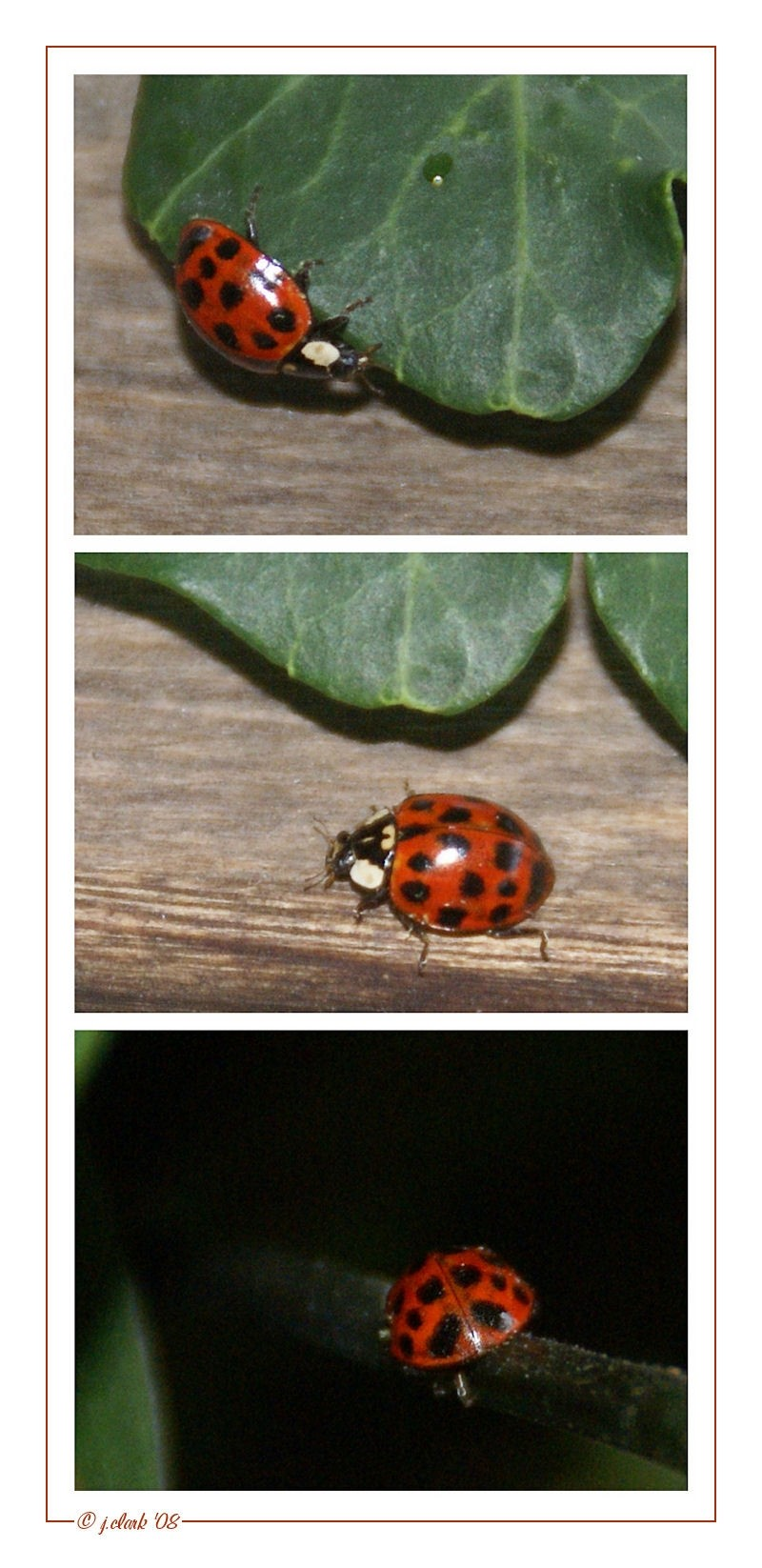 Ladybug, ladybug fly away home...