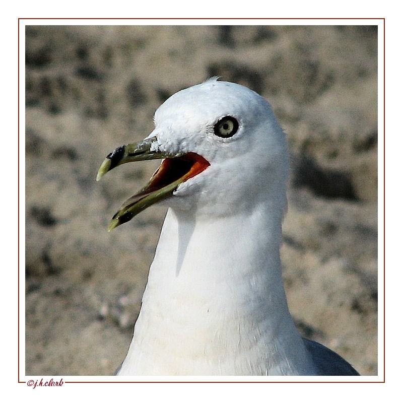 Some squawk...