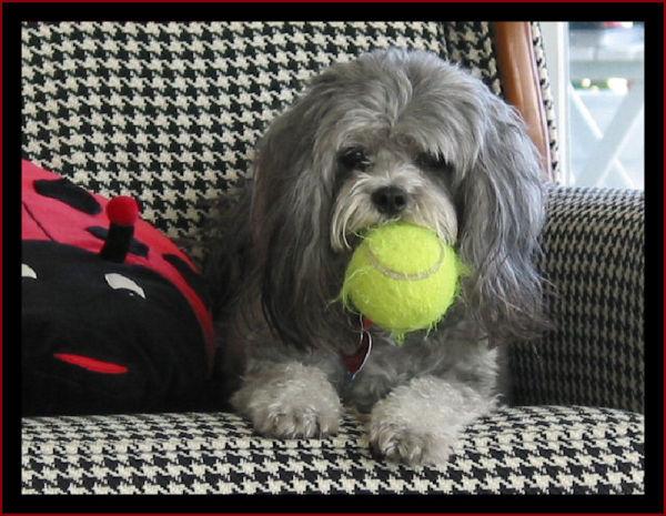 Belle's Ball