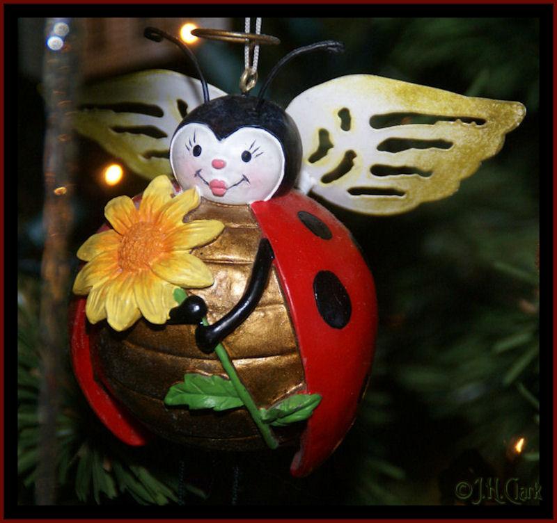 New Ladybug