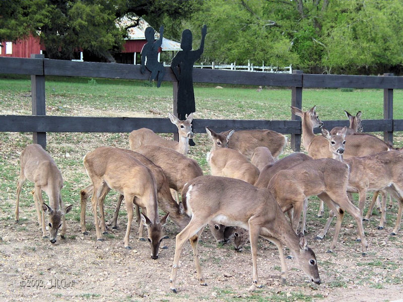 Oh dear, deer everywhere...