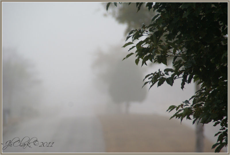 January morning fog...