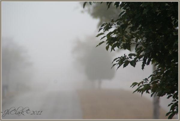 January morning fog...