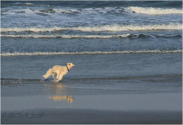 Playful pup...