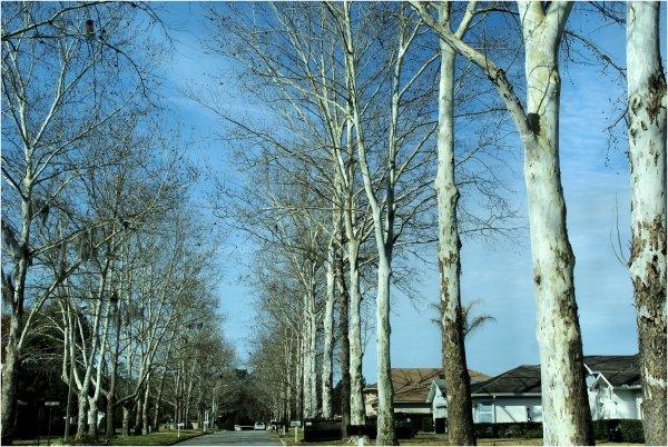 Winter trees...