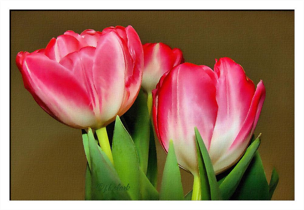 Easter tulips...