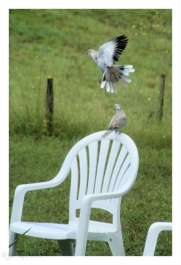 """Watch me fly, Mama..."""