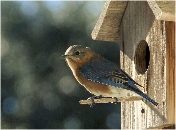 Bluebird farewell...