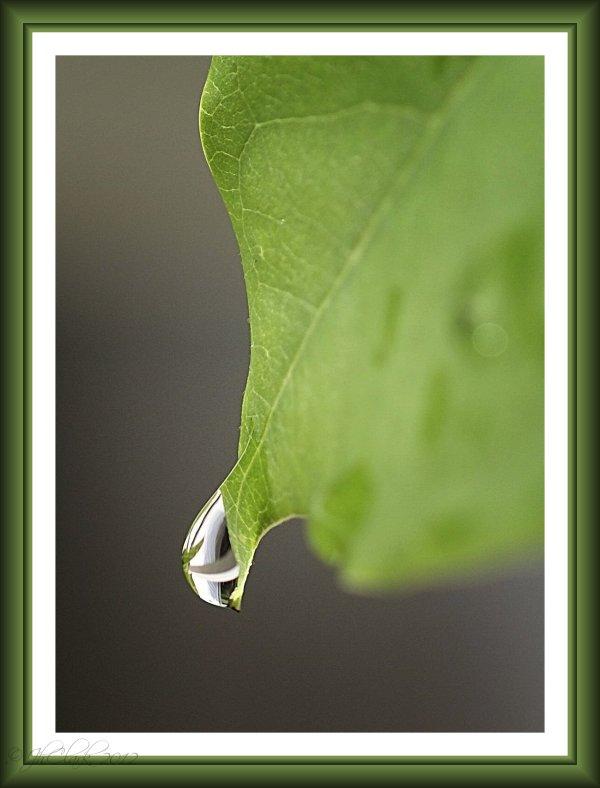 Beanstalk Leaf #4