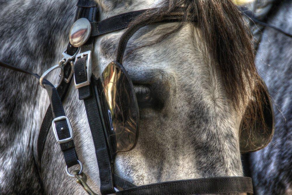 1/2 Dappled horse...