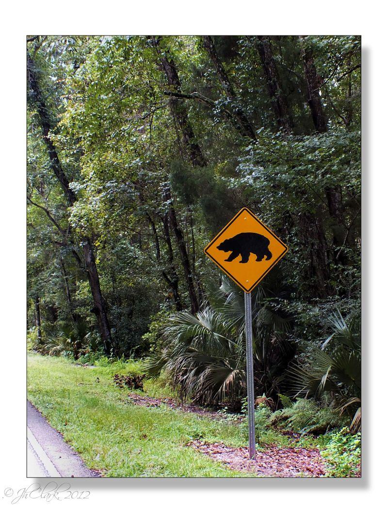 Bear Crossing...