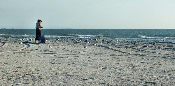 Treasure Island Gulls...