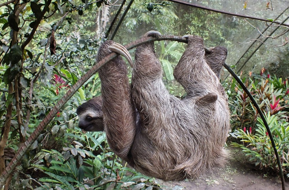 Another sloth shot...