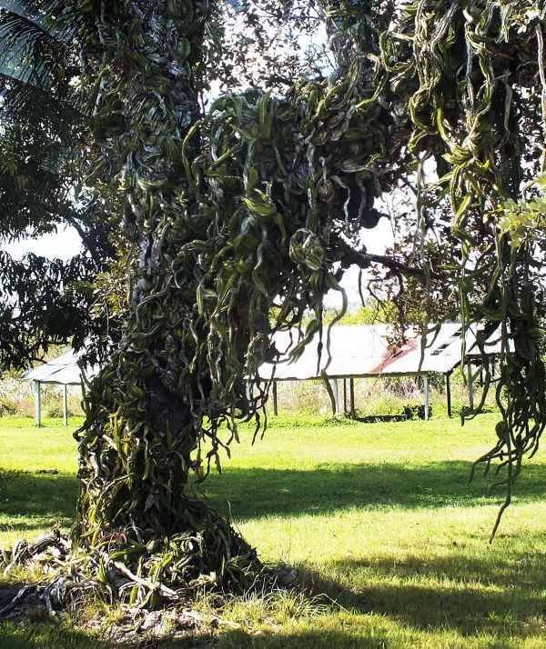 Snake Tree...