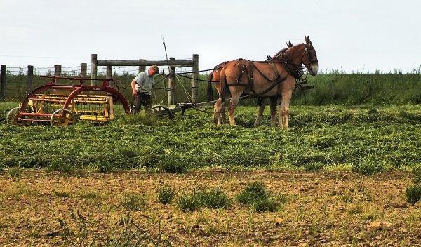 Plowing a field...