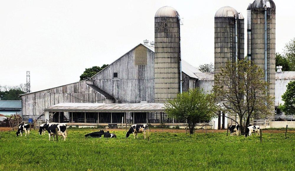 Amish barnyard...