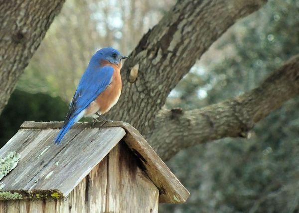 Bluebird... 1/3