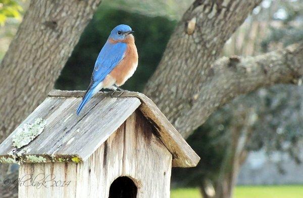 Bluebird... 2/3