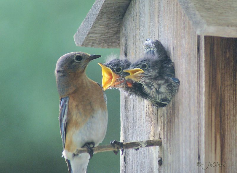 Little ones wanting food. ..
