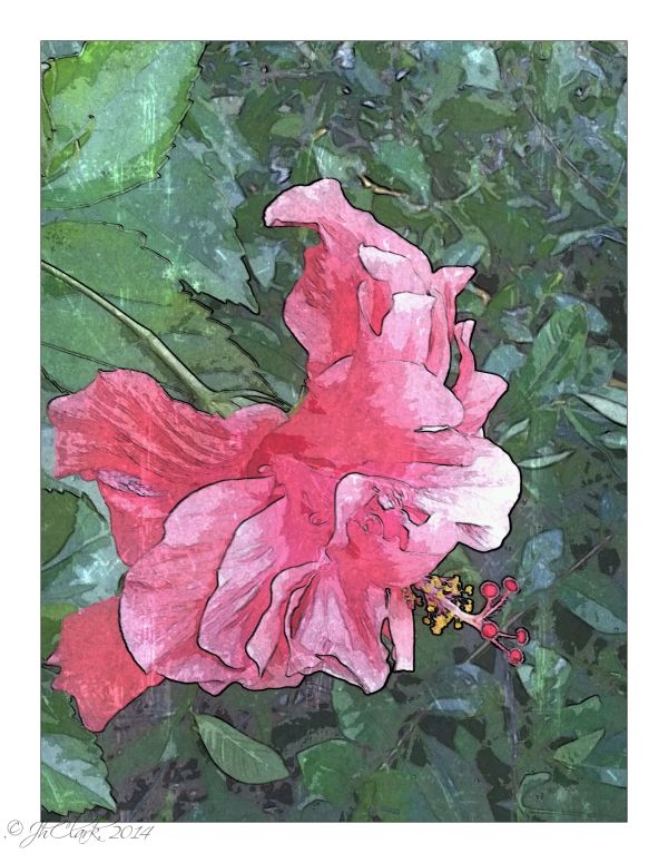 Hibiscus painting...