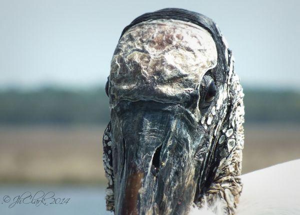 Strange head...