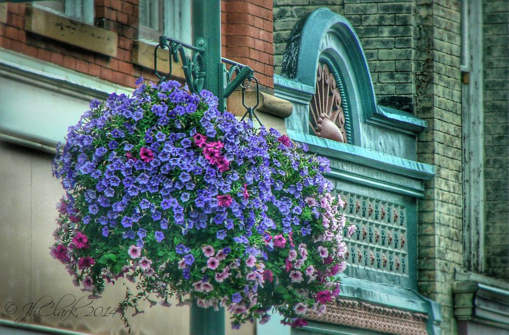 Downtown flowers...