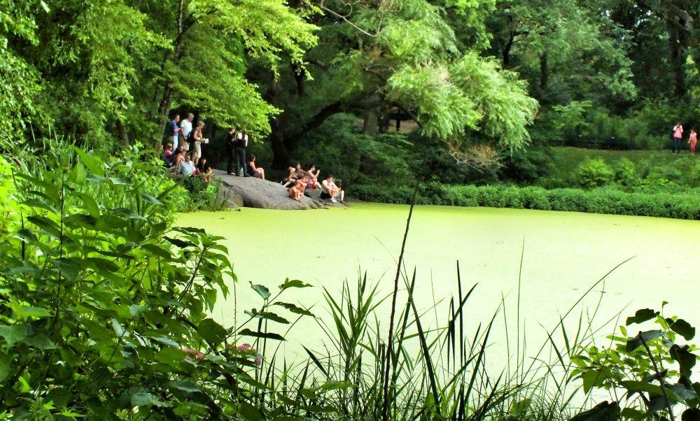 Turtle Pond in Central Park