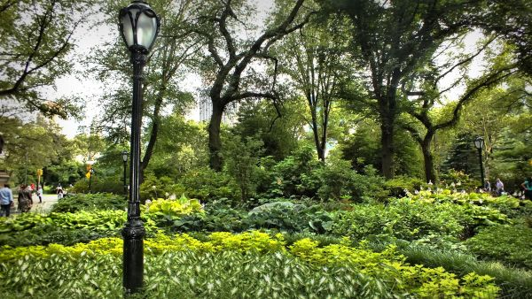 Central Park Greenery...