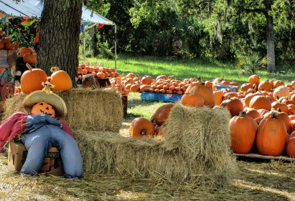 Lazin' around at the pumpkin patch...