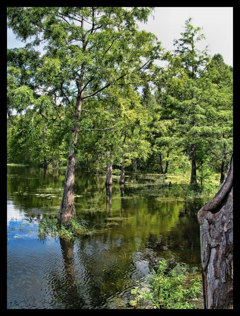Lake Lindsey, Brooksville...