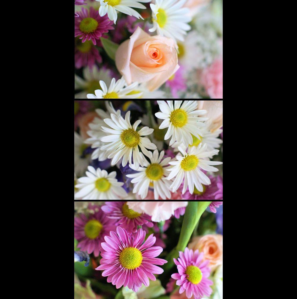 Floral triptych II