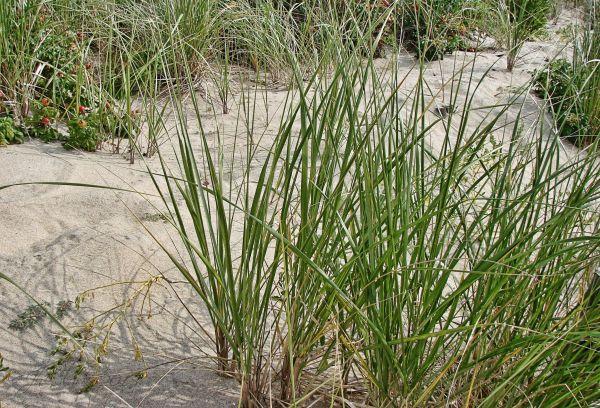 Natural grasses...