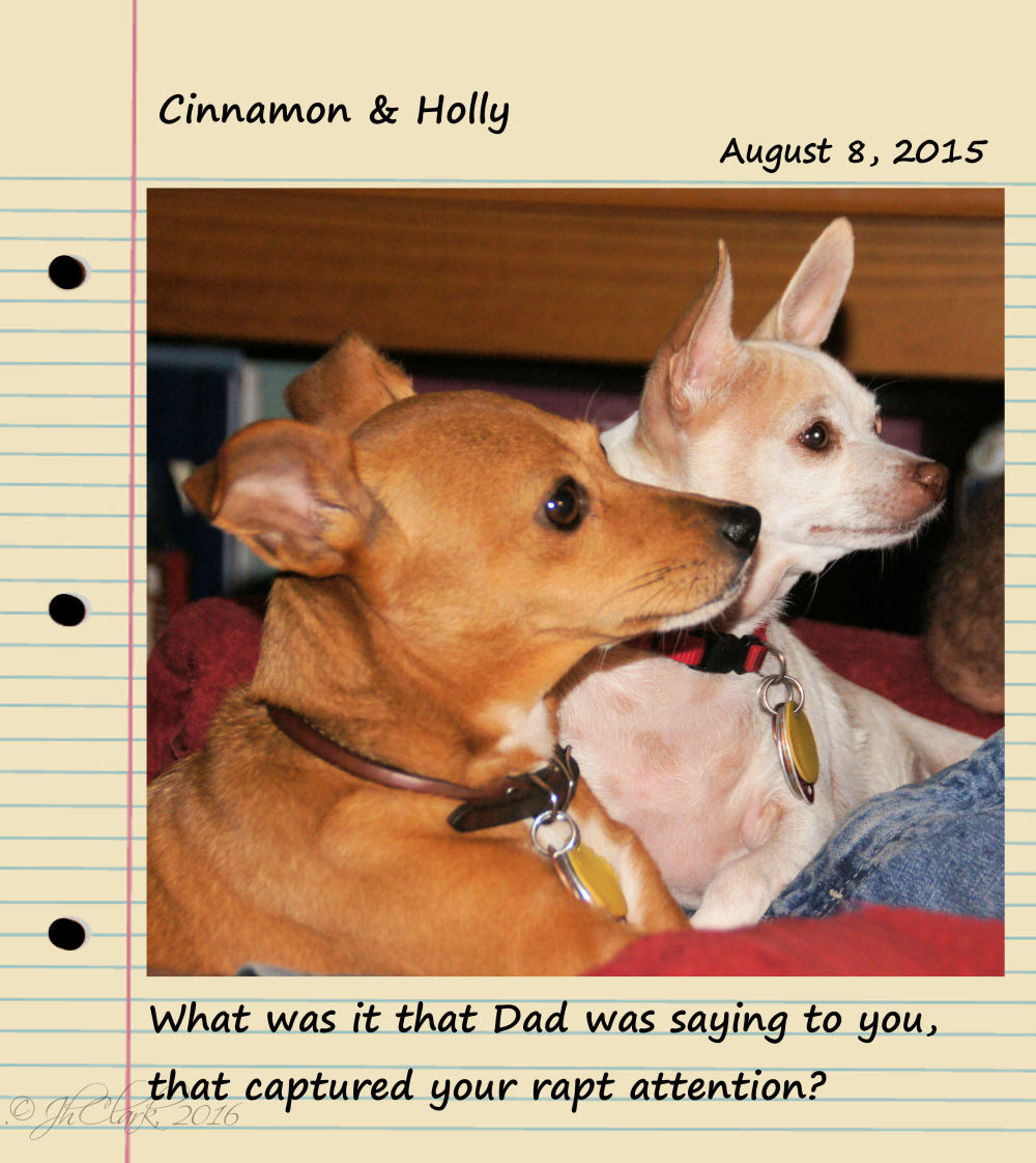 Cinnamon & Holly...