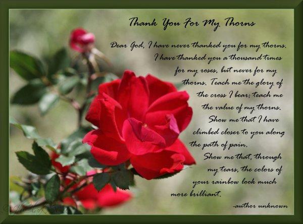 David's Roses...