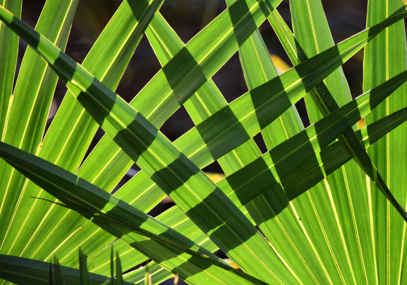Woven fronds...