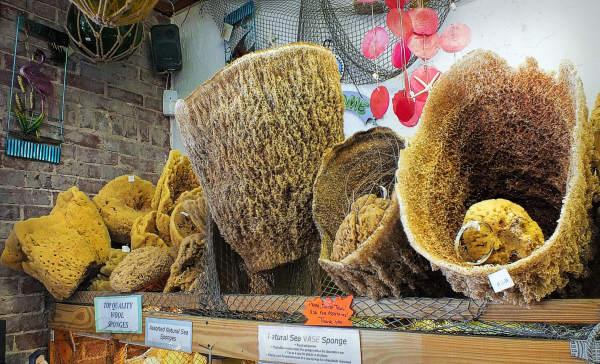 Basket sponges...