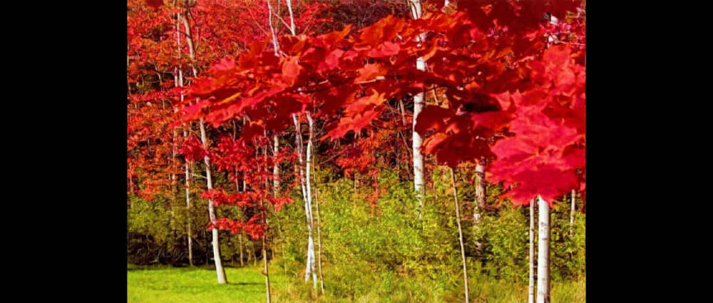 Canadian Reds...