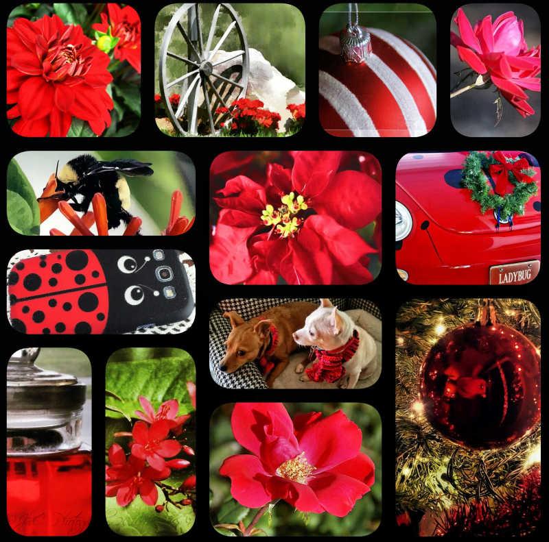 Christmas reds...