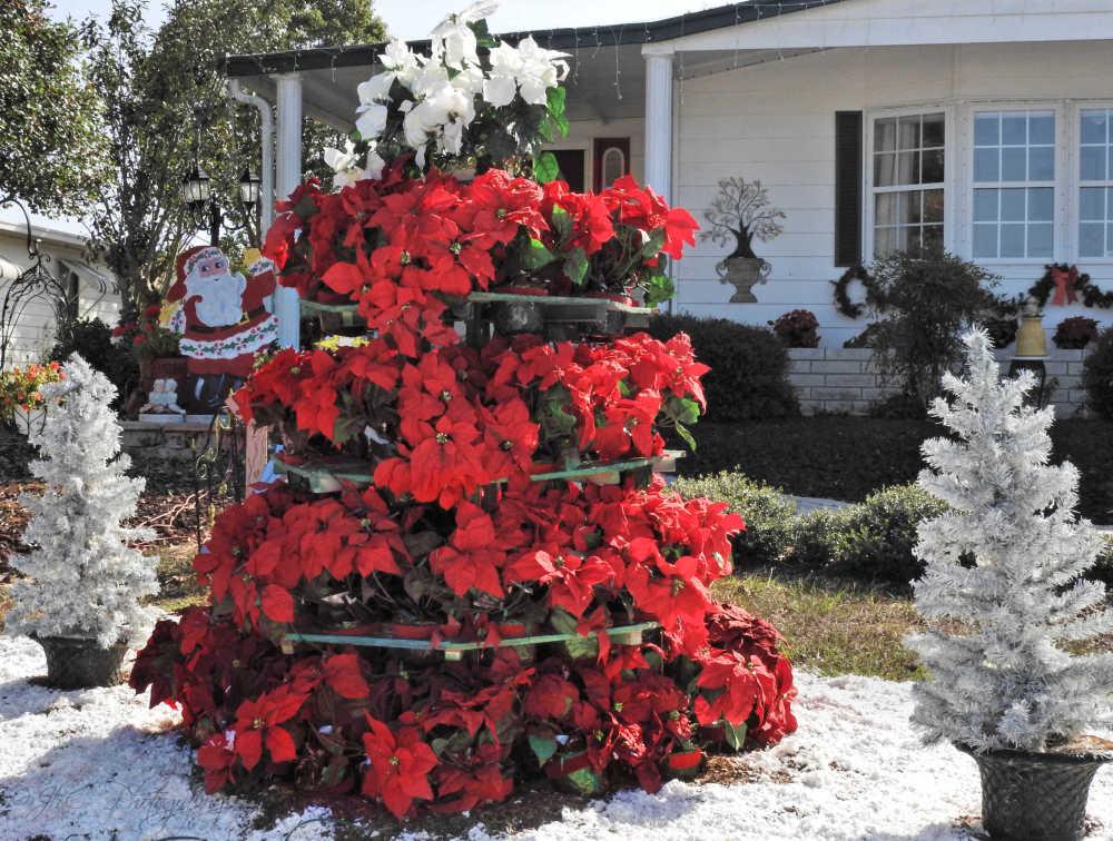 Neighbor's 'tree'...
