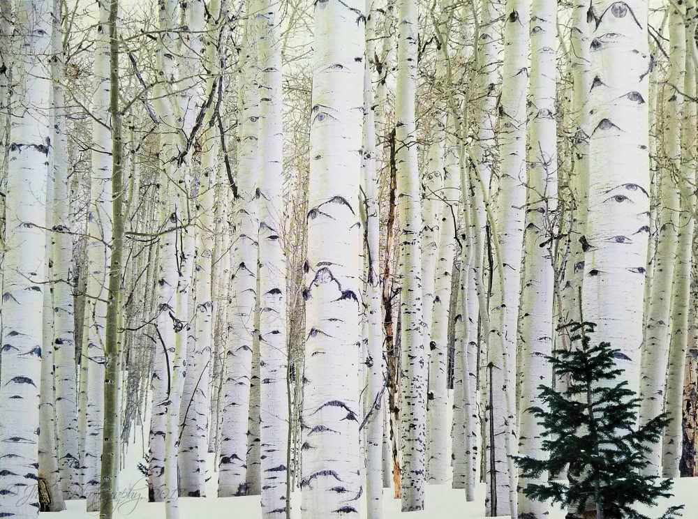 Aspen trees...