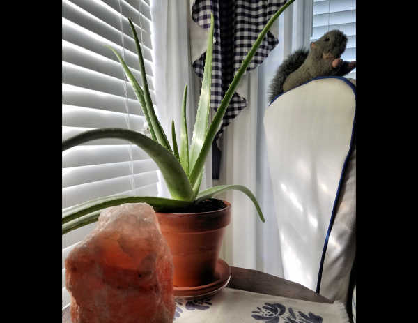 Aloe in the bedroom...