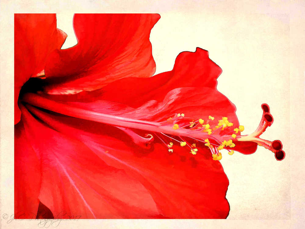 Painted Hibiscus...