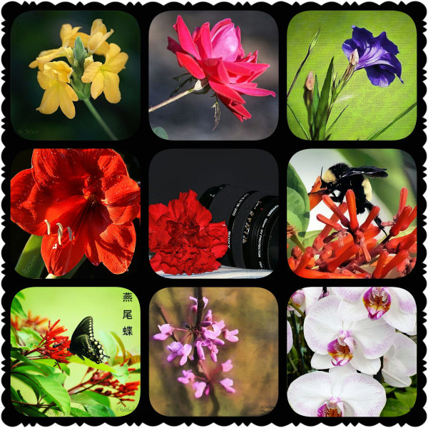 Mixed floral collage...