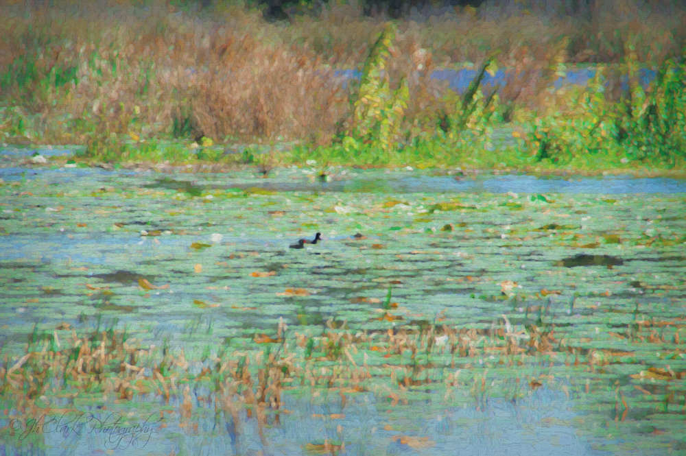 Birds feeding a la Monet...