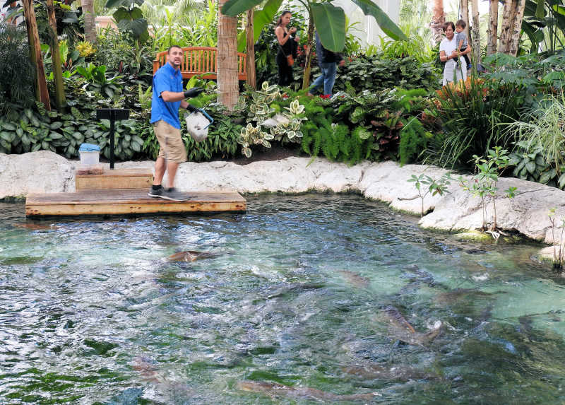 Feeding fish frenzy...