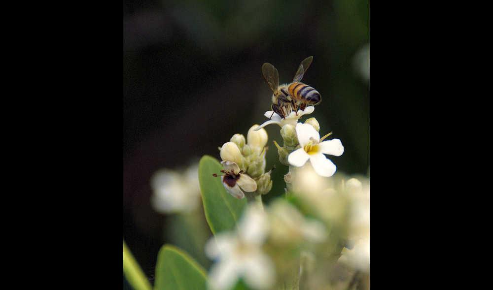 Buzzing bee...