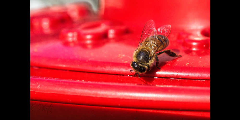 Another bee...